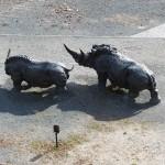 Парочка носорогов